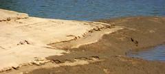 Piaskowa ostroga (Hejma (+/- 4400 faves and 1,4 milion views)) Tags: nature water yellow river landscape daylight sand poland polska natura woda sandbank wisa wiato rzeka ty piasek krajobraz acha thevistula grotnikimae