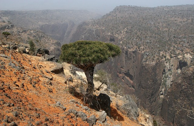 Mysterious Socotra.