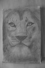 IMG_3142 (Marco_Gans) Tags: pencil head drawing lion app bleistift zeichnung instagram
