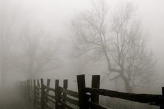 Misty Parkway in Black & White (esywlkr) Tags: bw mist nature rain weather fog fence nc northcarolina blueridgeparkway wnc