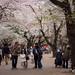 Omiya Sakura 2015 Spring