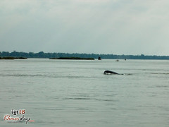 Dolphine - Mekong Discovery