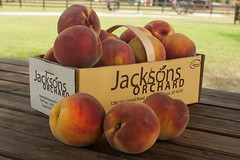 Autumn Star-8177 (Jackson's Orchard) Tags: kentucky peach orchard bowlinggreen bowlinggreenky jacksonsorchard autumnstar