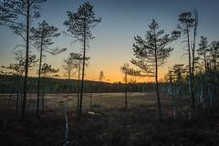 Bergslagen (PixPep) Tags: sunset sweden beautifullight swamp bog filipstad mire bergslagen canoneos1dsmarkiii pixpep gammelkroppa