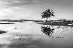 "Praia da Atalaia (felipe sahd) Tags: praia beach brasil noiretblanc atalaia aracaju sergipe 123bw ""flickrtravelaward"""