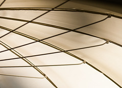 the umbrella (rooibusch) Tags: schirm sonnenschirm umbrella