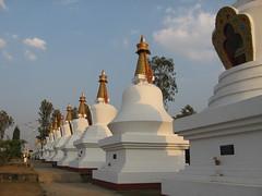 """Little Tibet"" in India (Sasha India) Tags: india buddhism karnataka indien hindistan buddhismus 印度 भारत littletibet הודו 인도 இந்தியா الهند буддизм هندوستان индия ινδία індія карнатака հնդկաստան אינדיע อินเดีย ભારત ინდოეთში"