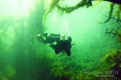 IMG_5954 (2) (SantaFeSandy) Tags: giant snapper turtle cave diving sinks lafayette blue springs state park sandrakosterphotography sandrakosterphotographycom sandykoster sandy sandra santafesandysandrakosterphotographycom sandrakoster algae green sink stevens 1 snake