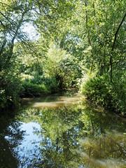 the river Wallington (martin_swatton) Tags: uk summer hot reflection river olympus hampshire pro 28 tranquil omd em1 wallington polariser 1240 mzuiko