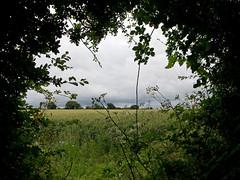 Arlesey to Letchworth Garden City (Cymbidium Clarisse) Tags: city nikon hiking walk hike letchworth walkers nikondigital englishcountryside countrywalk swc arlesey countrysidewalk nikon1 swcwalks nikon1j2 swcwalk233 saturdaywalkersclub