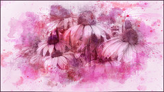 Posing Cones (Imagemakercan - The Lensdancer) Tags: echinacea coneflower flowers pink painted fineart joygerow2016 magenta