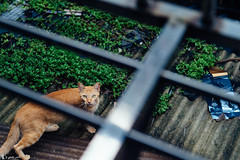 It's only you and me now (rabbit7419999) Tags: cat taipei taiwan alley alone staywithme d4s nikkor2470f28