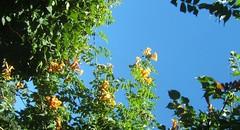 Fleurir le ciel (MAPNANCY) Tags: fleurs nancy ciel couleurs feuillage