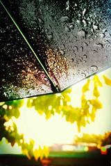 Summer Rain (Explore) (sjpowermac) Tags: railway bridge umbrella raindrops 37603 37604 york scarboroughbridge charter tree spoke blowout locomotive foliage independentyorkshireman