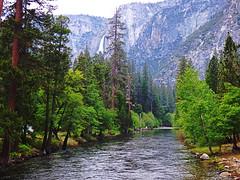 Merced River, Valley Yosemite National Park (stephengregory80) Tags: yosemite yosemitevalley valley bridge river mercedriver california usa tree merced redwood mountain nationalpark waterfall