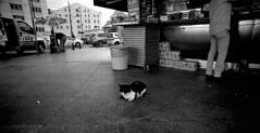 Istanbul Cat (blueP739) Tags: istanbul olympus om4 om1n olympusom om3ti om2sp om10 om1 om2n om3 olympusom1 plustek7200 pussy kentmere100 scanner cat street bw blackwhite id11 id1111