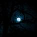 Moonglow