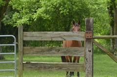 I Only Have Eyes (Get The Flick) Tags: horse gate pasture barnesvillega flintriverarena