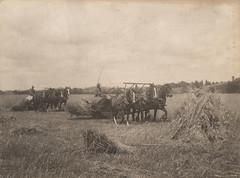 Anglų lietuvių žodynas. Žodis grain binder reiškia grūdų rišiklio lietuviškai.