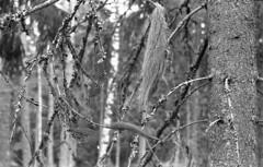 ProminentPostCLA019 (A.Sundell) Tags: old bw nature landscape blackwhite sweden tmax antique voigtlander natur retro d76 german epson sverige v600 tmax400 voigtländer westgermany landskap svartvit västmanland ultron prominent surahammar voigtländerprominent ultron50mmf2 voiglaender tmaxfix