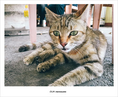 (ikuin) Tags: cat   taitung iphone 150510 iphone6