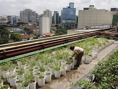 GP0STP0J6 (Greenpeace International) Tags: brazil plants buildings roofs oneperson foodforlifecampaigntitle