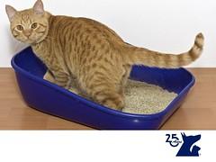 Calculos renales en los gatos. CLINICA VETERINARIA DEL BOSQUE 2 (tipsparamascotas) Tags: mascotas veterinaria delbosque estticacanina cuidadodemascotas mascotassaludables veterinariadelbosqueveterinariacuidadodemascotasmascotassaludablesesteticacaninaclinicaveterinariadelbosqueespecialistasencuidadodemascotaswwwveterinariadelbosquecomveterinariadelbosque