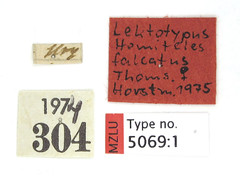 Hemiteles falcatus Thomson, 1884 (Biological Museum, Lund University: Entomology) Tags: cgthomson hymenoptera ichneumonidae cryptinae hemiteles falcatus mzlutype05069