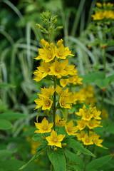 2016.07.014 Abbotsbury (77) (Kotatsu Neko 808) Tags: uk england gardens dorset subtropical abbotsbury abbotsburysubtropicalgardens