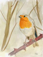 Rouge gorge (ybipbip) Tags: wild bird robin watercolor painting paint wildlife aquarelle peinture watercolour acuarela oiseau pintura aquarela aquarell acquerello akvarell smoothpaper