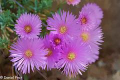 Explosion de flores (dapray) Tags: geostate geocountry flor flores planta jardin colors world colorsinourworld