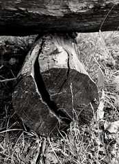 wooden (Lets go hand in hand.) Tags: wood wooden blackandwhite bw nature tree natur natural italy
