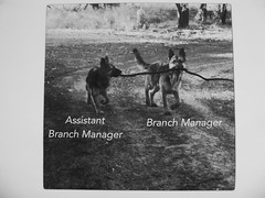The branch manager and the assistant (seikinsou) Tags: brussels belgium bruxelles belgique summer photocopy branch manager assistant bw alsatian germanshepherd dog