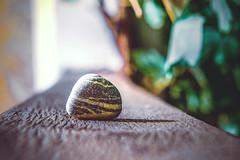 Stone find (allejandrine) Tags: sea stone stillife find