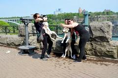 Canada 2016  Niagara Falls  Dog seles (Michiel2005) Tags: niagarafalls canada usa ontario waterval dog huskie selfie