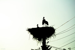 """What we see depends mainly on what we look for"" (renkata23) Tags: stork storks birds birdy nest silhouette nikon nikonbulgaria outdoor"