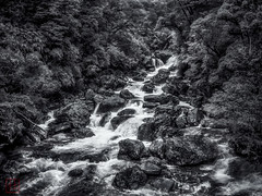Doubtful Sound (Bill Thoo) Tags: doubtfulsound newzealand southisland monochrome blackandwhite river water wilderness nationalpark fjordland forest landscape travel trees panasonic gf1 20mm