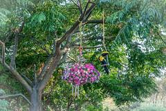 PhotoBook-010 (Shad005) Tags: toucan flower nature tree