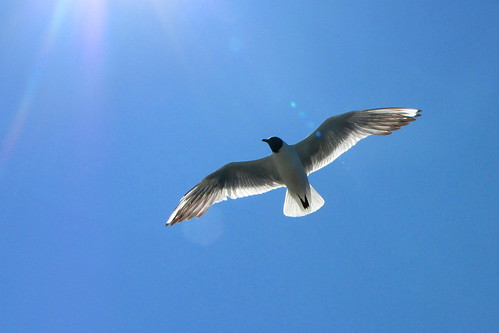 Seagull in sunlight