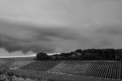 Rheinhessicher Sommer 2016 (rainbowcave) Tags: vineyards clouds landscape path kleinwinternheim rheinhessen rhenishhesse weinberge landschaft gemarkung feldweg weg wolken