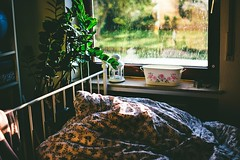 how can something that was so familiar feel like a dream now (ivvy million) Tags: interior bedroom ivvymillion rain regen window fenster light evening sun sonne abendsonne plant tropfen drops zimmer bett nikond7100 35mm bed room