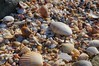 Sea Shells (shinbonerbaz) Tags: sony alpha a57 slt α 18250mm sal18250 minoltaamount sea shellsnarawntapu national park tasmania australia