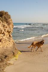 IMGP3346 (jamin.sandler) Tags: pentaxistds palmachimbeach smcpentaxm2435mm dog
