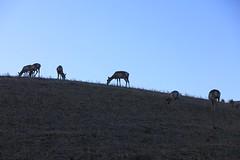 IMG_0034 (GOD WEISFLOK) Tags: montana wyoming usa yellowstonepark gordweisflock weisflock
