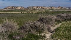 C2681-Bardena negra (Eduardo Arias Rábanos) Tags: sky field grass landscape lumix desert country paisaje panasonic erosion soil cielo land campo desierto g6 navarra tierra hierba erosión bardenasreales eduardoarias eduardoariasrábanos
