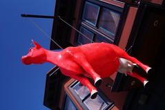 SoMa - The Holy Cow 1 (luco*) Tags: usa states californie san francisco soma the holy cow vache enseigne maison house california étatsunis united america damérique amérique
