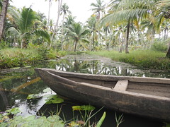 Kerala Backwater Backwaters India Indien Kollam District (c) (oksana8happy) Tags: copyright india green nature water boats boot boat asia asien heiconeumeyer wasser december indian natur kerala boote canoe palmtrees palmtree grün woodenboat kanu palme indien backwaters coconutpalm backwater southindia cocotier keralabackwaters cocotiers southasia copyrighted palmen 2014 in coconutpalms indisch godsowncountry holzboot kokosnusspalme kokospalme keralan keralanbackwaters coconutpalmtree südindien kollamdistrict keralabackwater südasien keralanbackwater tp201415