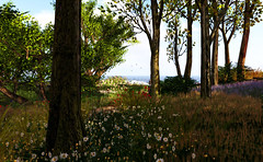 A far distant shore (Teddi Beres) Tags: life flowers trees beach daisies forest spring woods sl valley second eden
