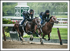 Materiality and Stanford (EASY GOER) Tags: horses horse ny newyork sports race training canon track running racing 5d athletes races thoroughbred equine thoroughbreds belmontpark markiii workouts