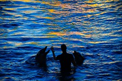 Dolphin Show  / Sea World / Gold Coast  / Theme Park Capital of Australia (haphopper) Tags: show shadow people water animal silhouette dolphin performance australia entertainment qld queensland destination guest seaworld performers  themepark  goldcoast 2015  ool seaanimal